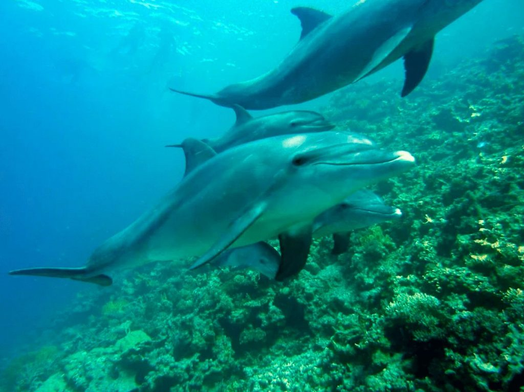 Il Santuario dei Cetacei